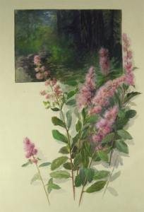 wildflowers_spiraea