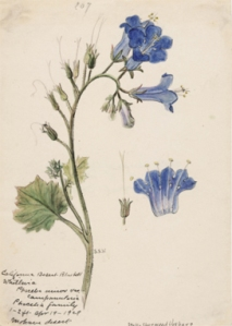 wildflowers_vosberg